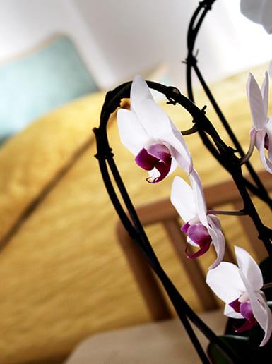 hotel flora bellaria home vacanze a bellaria orchidea camere