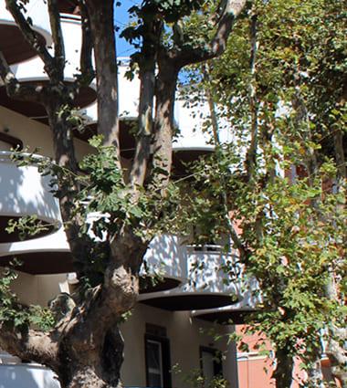 hotel flora bellaria servizi vacanze all'hotel flora